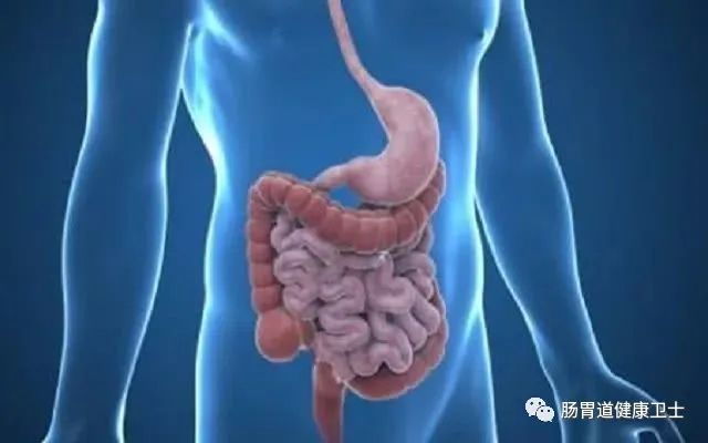 长期肠胃不好怎么调理,肠胃不好有哪些症状
